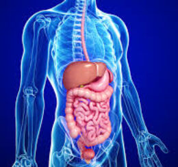 digestive-system125cases